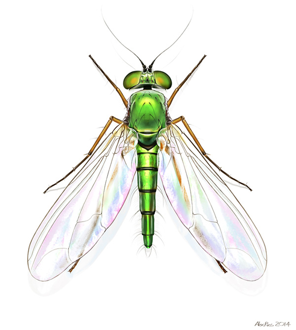 0958_Insect_final_sm