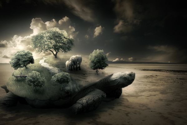 Create-a-Surreal-Turtle
